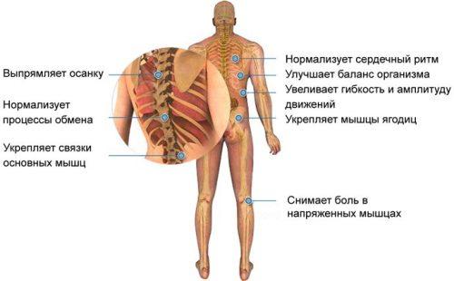 Мышцы, прорабатываемые хулахупом